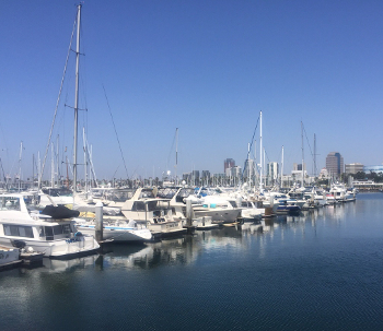 Shoreline Marina daytime photo
